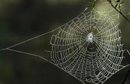 عنکبوت تار میزند